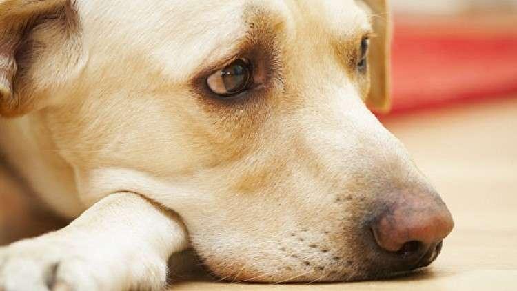 موت كلب شوقا لصاحبه يعد أمرا نادر الحدوث.