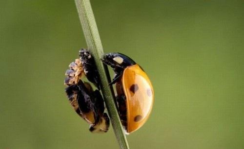 احلى صور حشرات روعة 2018 749700285.jpg