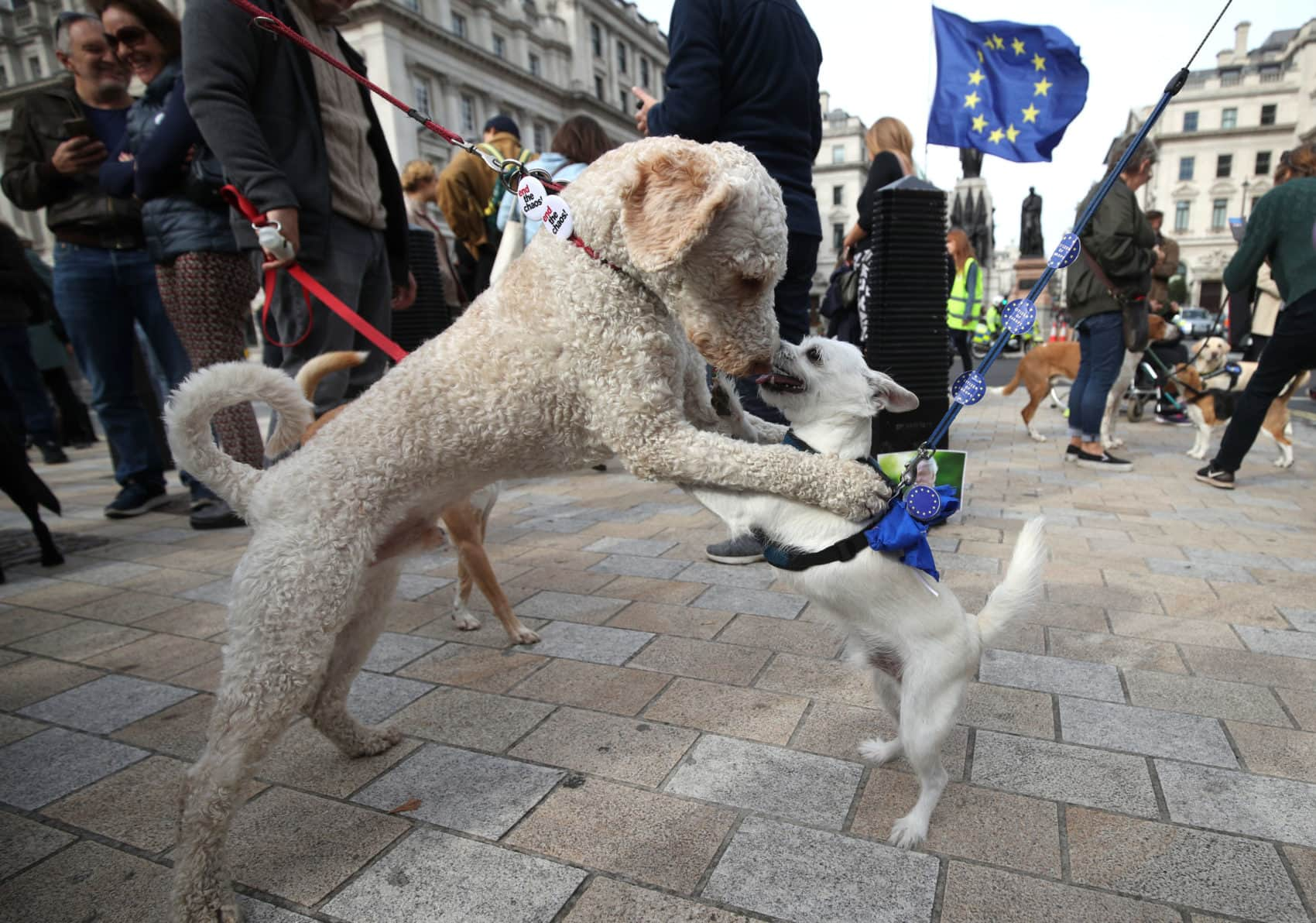 Wooferendum: thousands of dogs and their owners hound Parliament Square to demand a second EU referendum